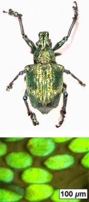 beetle_x220_0